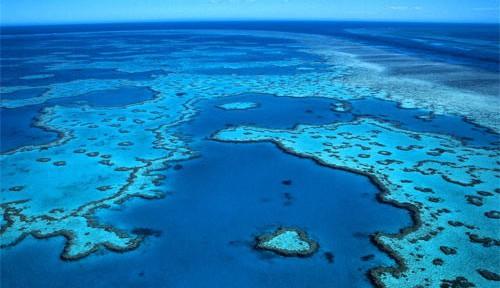 Barriera-corallina.jpg
